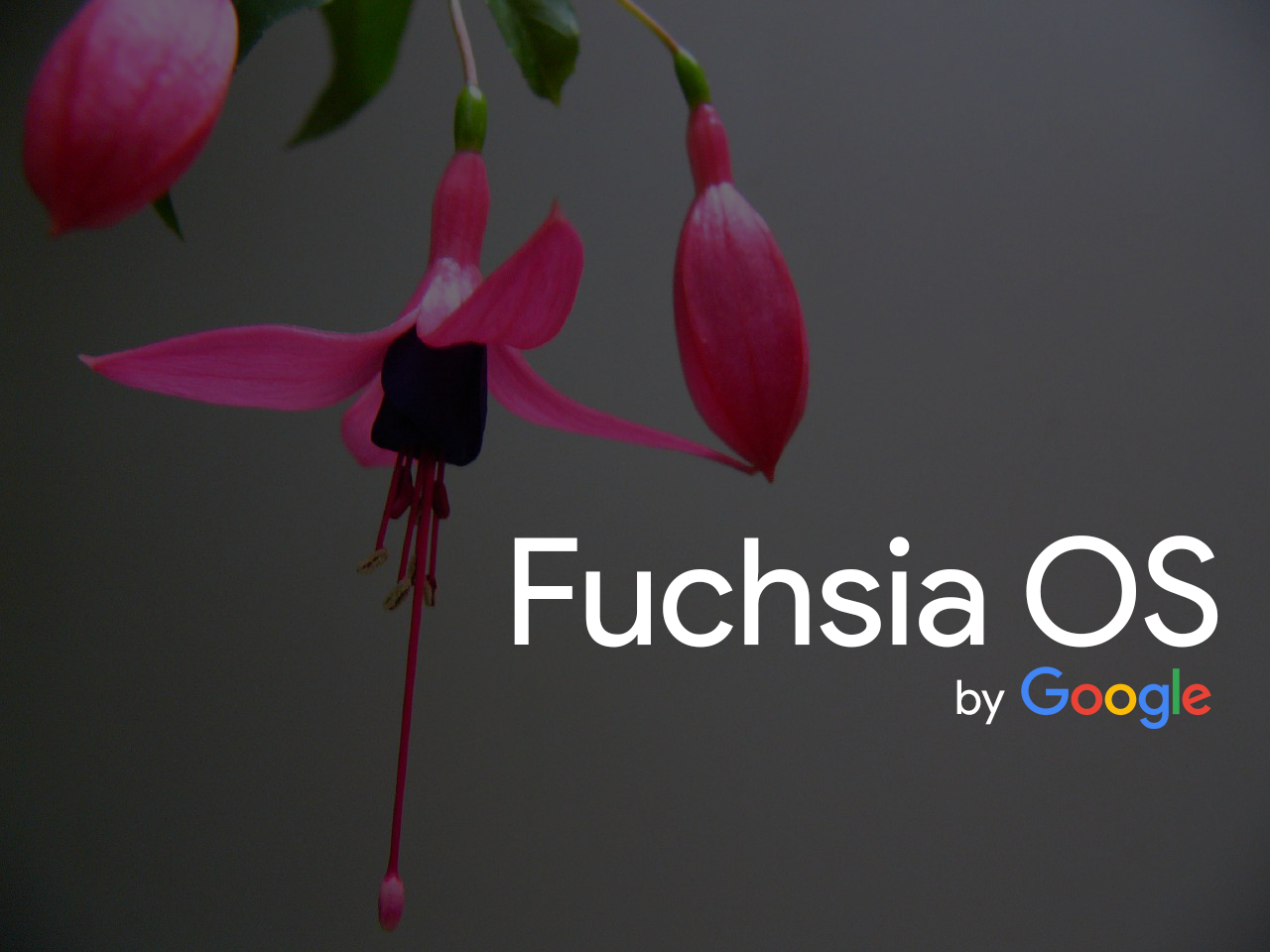 Is Google Really Replacing Android With Fuchsia OS?